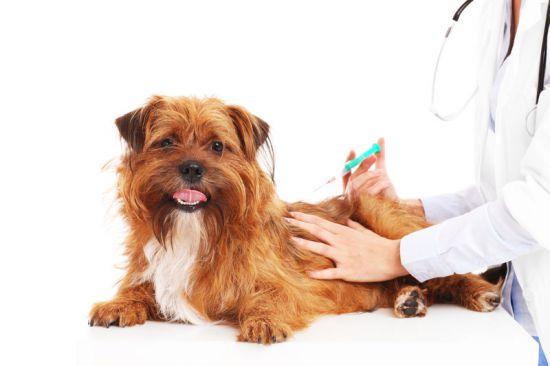 Прививки собаки для семьи - 574