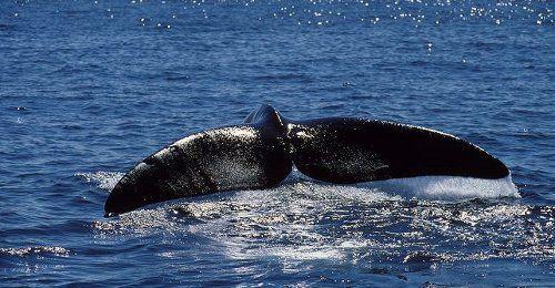кит препарат от холестерина