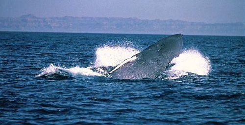 Рассказ про Китов, сочинение про рыб, живущих в океане ... | 257x500