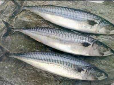 Скумбрия фото Фотогалерея :: рыба :: рыбная продукция